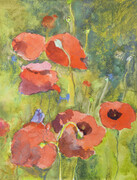 Poppies SOLD Prints Available